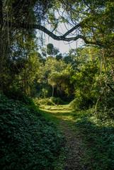 Jungle, near Santa Lucia estuary,South Africa