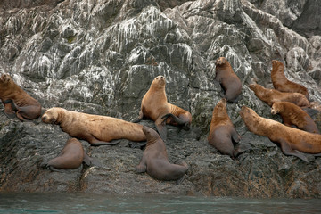 Seals resting on a rock