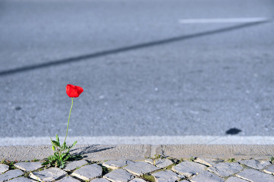 Growing plant on asphalt road