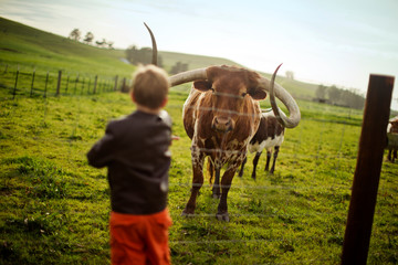 Large horned bull looking at a young boy holding his hand out through a fence on a farm.