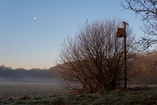 Moon on a foggy field near woods and lampost