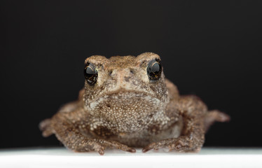 Frog macro picture