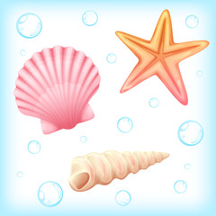 Shellfish and starfish vector illustration