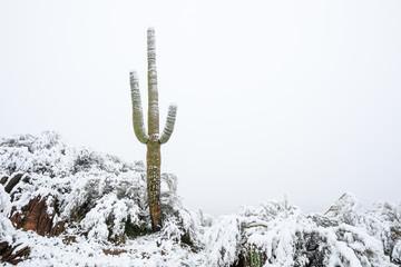 Foto op Aluminium Cactus Saguaro cactus in snow