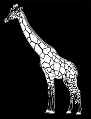 Giraffe, spotted long neck African animal.