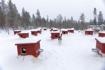Hunde-Hütten