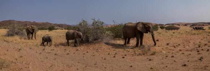 elephant wildlife watching, Torra conservancy, Kunene Region, Namibia