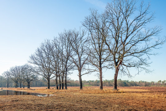 Row of trees with bare branches on the bank of a mere