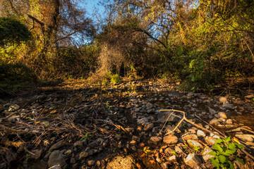 Dan river nature reserve, Israel