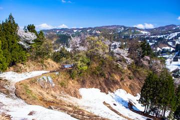 桜と残雪の棚田
