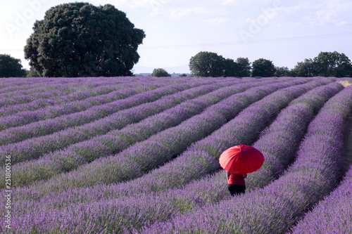 Woman With Red Umbrella Walking Among The Purple Flowers In A