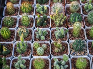 Small cactus in plant pot