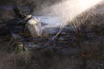 Keuken foto achterwand Schilderkunstige Inspiratie Raven at night.Scary crow in an overcast full moon nigh.A ray of light