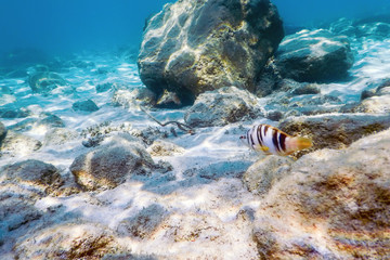 Sunbeams underwater rocks and pebbles on the seabed swimming fish