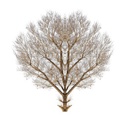 bare tree on white background