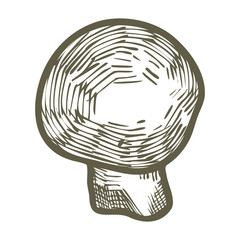 Hand drawn illustration sketch style champignon mushroom composition icon. Vector icons for web design. Farm fresh food isolated on white background. Doodle style mushroom