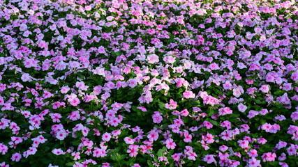 Spring Formal Garden. Beautiful garden of colorful flowers.Landscaped Formal Garden. Park. Beautiful Garden