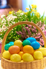 Colorful Easter Eggs in basket with spring flowers, on blurred background