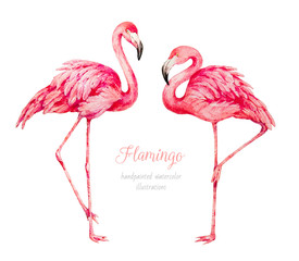 Flamingo. Watercolor botanical illustration