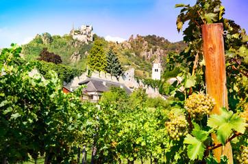 Vineyard in the famous Austrian winegrowing area Wachau, Dürnstein, Austria