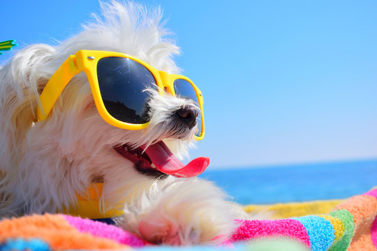 happy puppy with sunglasses