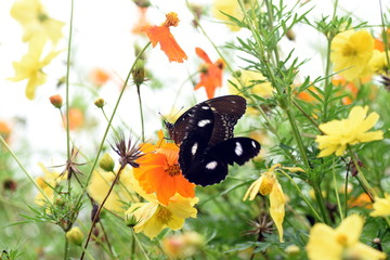 photo of butterfly at Flower in the garden