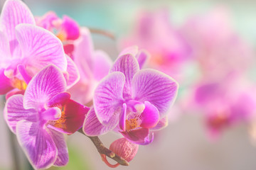Pink orchid in front of pastel coloured background and creamy bokeh