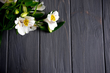 Background for text banner on a dark wooden background with white flowers. Blank, frame for text. Greeting card design with flowers. Aalstroemeria on wooden background. View from above