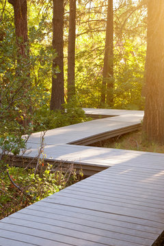 Zig zag winding path through forest. Course correction, change, future, goals concepts.