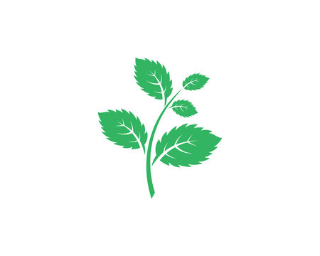 Mint leaves flat vector icon