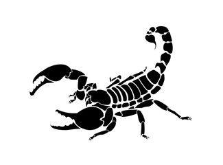 Vector scorpion illustration for logo and tattoo