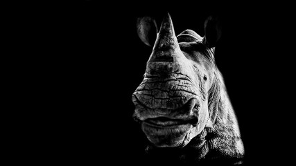 Papiers peints Rhino Portrait of a smiling rhinoceros on a black background
