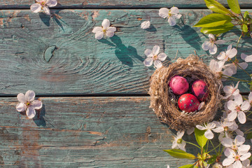 Easter eggs in nest with spring flowers on old wooden background