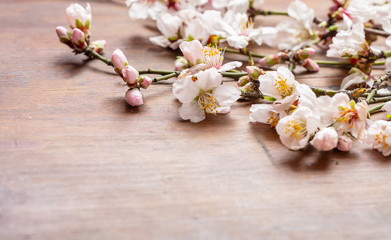 Almond blossoms bouquet on wooden  background, copy space