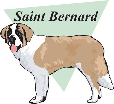 Saint Bernard Vector Illustration