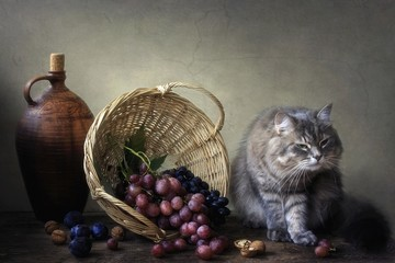 Gray kitty and basket with fruits