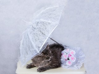 Gray kitty in wedding decorations