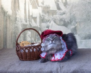 Kitty in carnival costume Little Red Hood Ridding