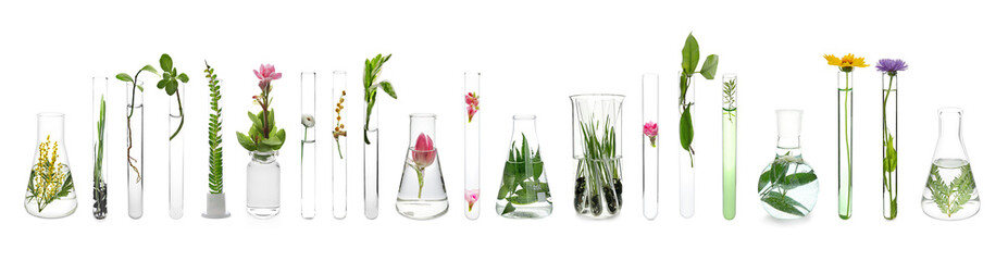 Photo sur Aluminium Pharmacie Laboratory glassware with plants on white background
