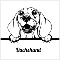 Dachshund - Peeking Dogs - - breed face head isolated on white