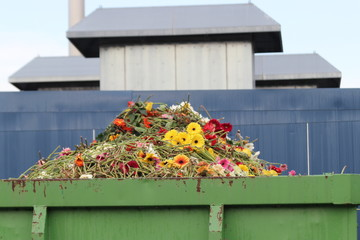 Gerbera flower as organic waste in container at a greenhouse nursery in Moerkapelle, the Netherlands