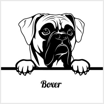 Boxer - Peeking Dogs - - breed face head isolated on white