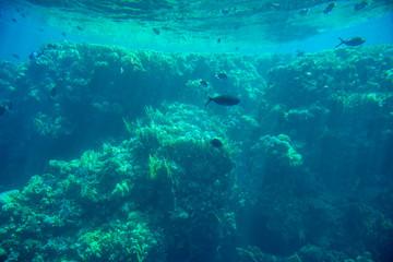 Aquatic Deep Seabed Underwater Background