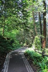 太平山の遊歩道