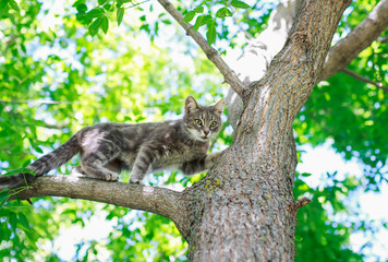 cute tabby kitten sits on a tree in a sunny summer garden and looks into the distance