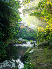lush green garden with water in Bali Indonesia