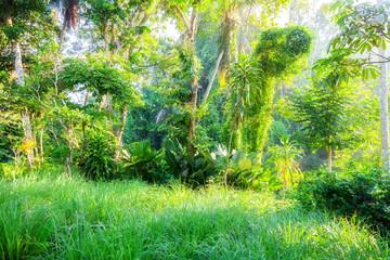 Lush green Bali nature plants vegetation
