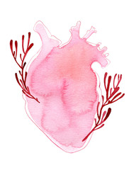 Watercolor realistic shape human heart with stems