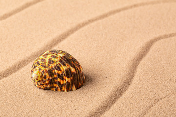 seashell mollusk on the beach sand. Concept for summer vacation.