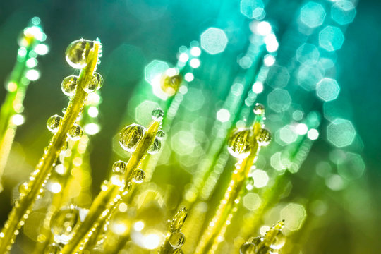 Transparent droplets of dew in grass on summer morning sparkle in sunlight in nature. Young juicy fresh grass with water drops.  Beautiful bokeh light green color close-up macro with a soft focus.